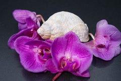 Ochids and seashells stock photo