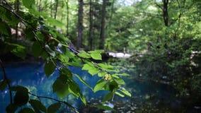 Ochiul Beiului,内拉河峡谷的一个小鲜绿色湖在Beusnita国立公园在罗马尼亚 影视素材
