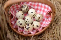 Ocho huevos de codornices abigarrados Imagenes de archivo