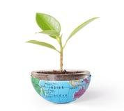 Ochrania środowiska pojęcia ziemię z drzewem Obraz Royalty Free