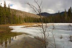 Ochraniający borealny bagno w północnym Canada zdjęcie stock