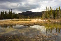 Ochraniający borealny bagno w północnym Canada obraz stock