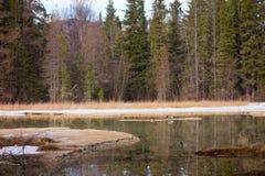 Ochraniający borealny bagno w północnym Canada zdjęcia royalty free