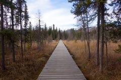 Ochraniający borealny bagno w północnym Canada zdjęcie royalty free