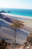 Ochraniający teren Qalansia plaża, piasek diuny i drzewo, Socotra, Jemen fotografia stock