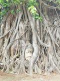 Ochraniający Buddha Obraz Royalty Free
