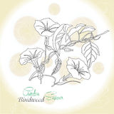 Ochre background  with  bindweed. Vector illustration Stock Image