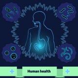 Ochrona ciało przeciw szkodliwym bakteriom i mikroorganizmom, zdrowy ludzki żołądek fotografia stock