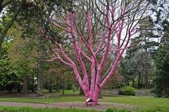 Ochrona drzewa od zimna Obraz Stock