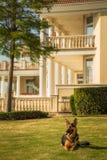 Ochrona pies zdjęcia royalty free