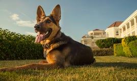 Ochrona pies zdjęcie stock