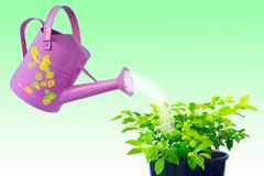 ochrony roślin obraz royalty free
