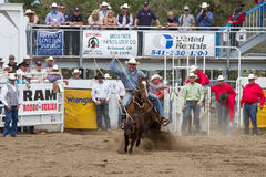 Ochse Roping - PRCA Schwestern, Oregon-Rodeo 2011 Stockbild