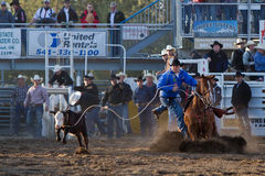 Ochse Roping - Schwestern, Prorodeo 2011 Oregon-PRCA Stockbilder