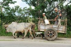 Ochsen, die den Wagen ziehen Stockfotos