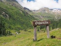 Ochsenalm,南蒂罗尔,意大利,欧洲 免版税库存照片