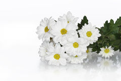 Ochsenauge-Gänseblümchen-Blumenstrauß Lizenzfreie Stockfotografie