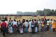 Ochsenkarrenrennen Stockfotografie
