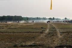 Ochsenkarrenrennen Stockbild