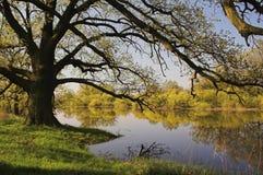 Ochtend bij de rivier Royalty-vrije Stock Afbeelding