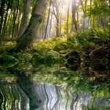 Ochtend in bos Stock Afbeelding
