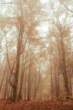 Ochtend in de herfst Rode dalende bladeren op groen gras Stock Foto's