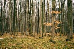 Ochtend in de herfstbos Stock Foto