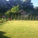 Ochtend in de tuin Royalty-vrije Stock Foto's