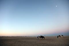 Ochtend in de woestijn van de Sahara Royalty-vrije Stock Fotografie