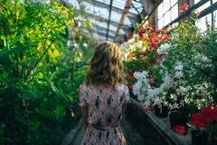 Ochtend in een mooie tuin Royalty-vrije Stock Foto's