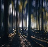 Ochtend en zonsopgang in het fantastische bos Stock Foto