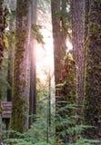 Ochtend Forest Glows royalty-vrije stock foto