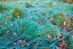 Ochtend in het bos Stock Foto