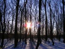 Ochtend in het bos Stock Afbeeldingen