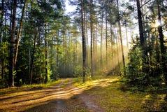 Ochtend in het bos Stock Foto's
