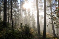 Ochtend in het bos Royalty-vrije Stock Fotografie