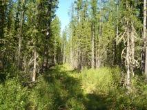 Ochtend in het bos Royalty-vrije Stock Foto