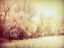 Ochtend in het bos in de winter royalty-vrije stock foto