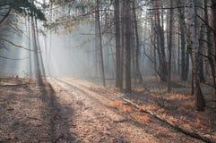 Ochtend in het bos, zonneschijn in het bos Royalty-vrije Stock Afbeelding