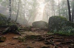Ochtend in het diepe bos stock foto's