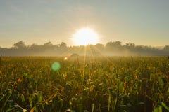 Ochtend in het graanlandbouwbedrijf royalty-vrije stock afbeelding