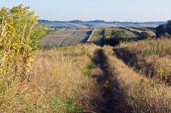 Ochtend in het platteland, gebiedsweg royalty-vrije stock foto