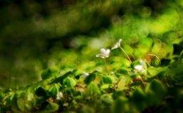 Ochtend het wekken van bloemen in de zon stock foto's