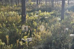 Ochtend in het zonnige bos stock fotografie