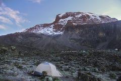 Ochtend in Kilimanjaro Royalty-vrije Stock Foto's