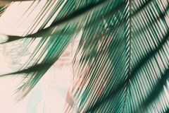 Ochtend lichte dalingen door palmblad Exotische tropisch stock afbeelding