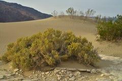 Ochtend in Mesquite-de Doodsvallei van Zandduinen Stock Fotografie