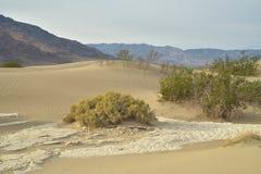 Ochtend in Mesquite-de Doodsvallei van Zandduinen Royalty-vrije Stock Afbeeldingen