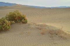 Ochtend in Mesquite-de Doodsvallei van Zandduinen Stock Foto