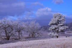 Ochtend met bevroren bomen royalty-vrije stock afbeelding